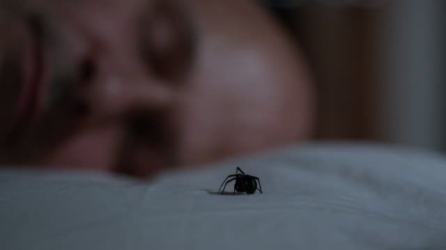 man wakes up to see black widow spider sitting on his pillow - bedclothes stock videos & royalty-free footage
