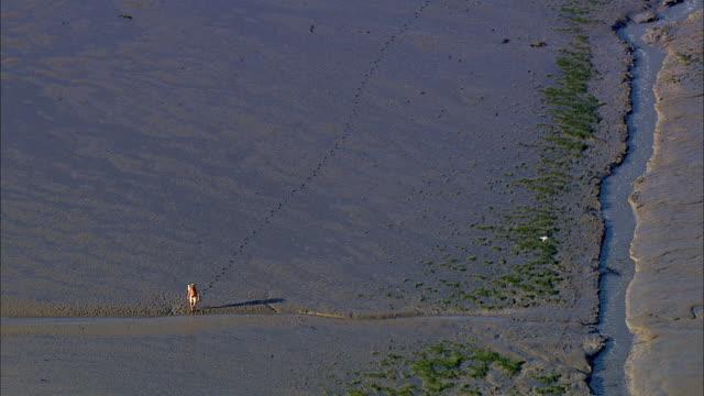 AERIAL WS Man waliking on mudflats / Suederoog, Schleswig-Holstein, Germany