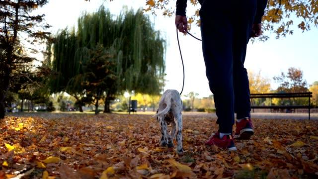 stockvideo's en b-roll-footage met man lopen van een hond in een park in het najaar - routine