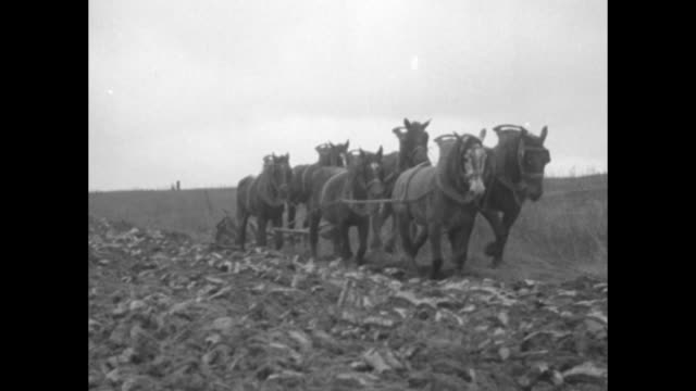 man walking beside plow as horses pull plow across field in chateau-thierry, where the first and second battles of the marne were fought / note:... - battle stock videos & royalty-free footage