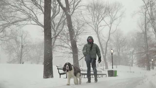 Man walking dog / After a day of 60 degree Fahrenheit temperature winter storm Niko hits the Northeast of the United States / Central Park Manhattan...