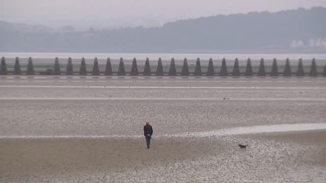 man walking dog along deserted beach - one senior man only stock videos & royalty-free footage