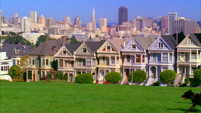 vídeos y material grabado en eventos de stock de ms, man walking dogs in alamo square park, victorian houses and city skyline in background, san francisco, california, usa - pirámide transamerica san francisco