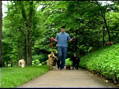 man walking dogs on path - dog walker stock videos and b-roll footage