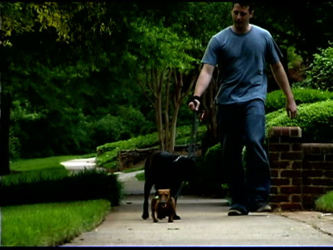 man walking dogs on sidewalk - one mid adult man only stock videos & royalty-free footage