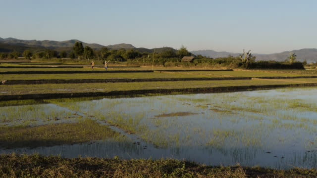 man walking from hut in rice paddie in luang namtha, laos - spoonfilm stock-videos und b-roll-filmmaterial