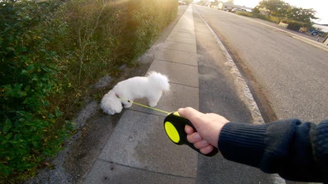 POV of man walking his dog on sidewalk as the sun sets