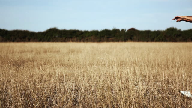 ws man walking in field and stretching arms / corsept, loire-atlantique, france - 人の腕点の映像素材/bロール