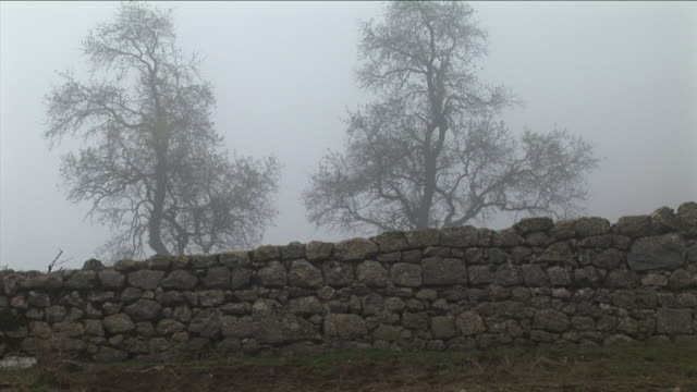 WS, Man walking in foggy landscape along stone wall, bare trees in background, Pancorbo, Burgos, Spain