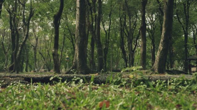 man walking in nature - athlete stock videos & royalty-free footage