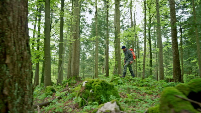 man walking in the forest carrying a large backpack - hiking stock videos & royalty-free footage