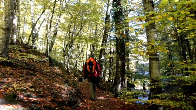 Man walking in the forest in autumn