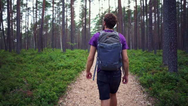 man walking in the forest - lithuania stock videos & royalty-free footage