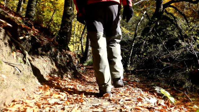 Man walking in the trail near a foggy lake  in autumn