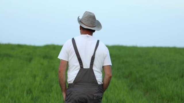 man walking in the wheat field - farm worker stock videos & royalty-free footage