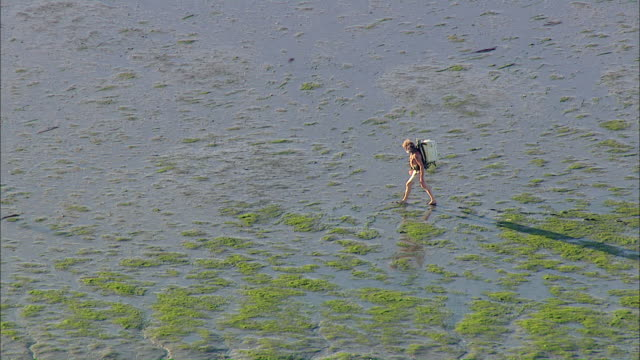 AERIAL MS TS Man walking on mudflats / Suederoog, Schleswig-Holstein, Germany