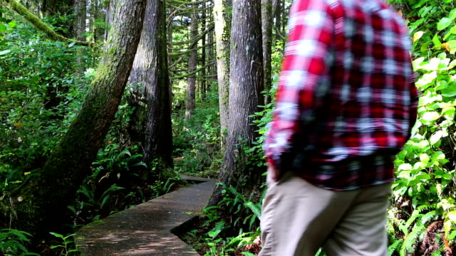 man walking pacific rim national park reserve vancouver island - national park stock videos & royalty-free footage