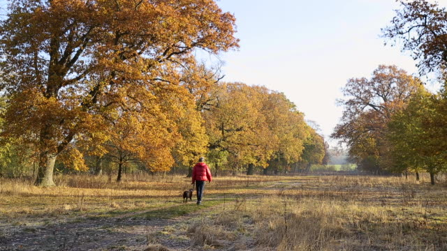 stockvideo's en b-roll-footage met man walking pet dog on autumnal footpath - ski jack