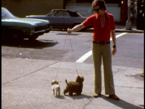 1973 ms man walking small dogs on queens blvd / queens, new york - queens stock-videos und b-roll-filmmaterial