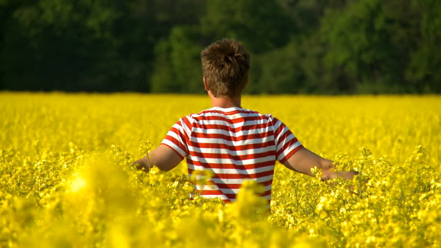 hd: man walking through a field of yellow flowers - crucifers stock videos & royalty-free footage
