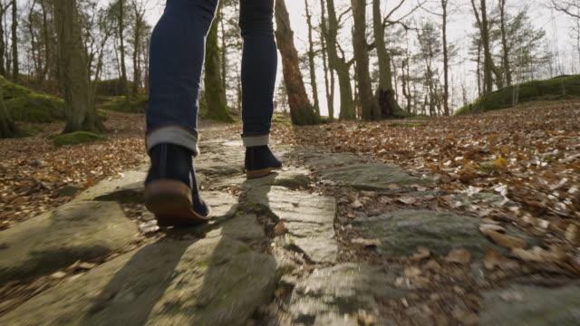 vídeos de stock, filmes e b-roll de homem andando por uma floresta - atrás