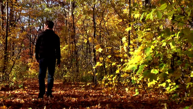 stockvideo's en b-roll-footage met man walking through autumn woods in michigan - bos