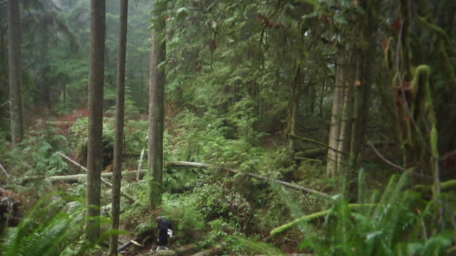 WS TD Man walking through forest / Vancouver, British Colombia, Canada