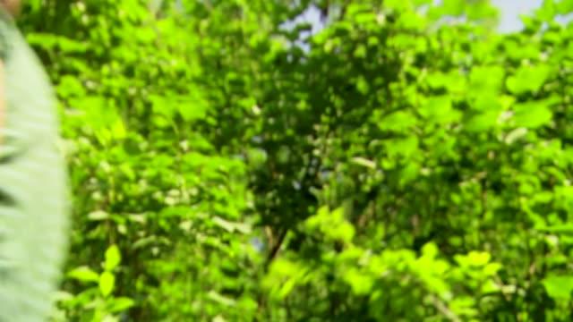 stockvideo's en b-roll-footage met man walking through forest - plant attribute