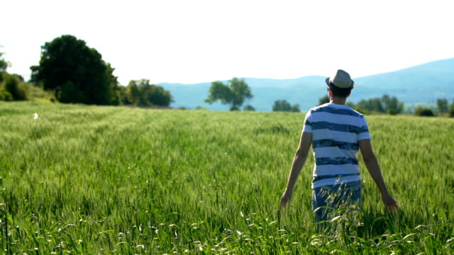 man walking through wheat field - serbia stock videos & royalty-free footage