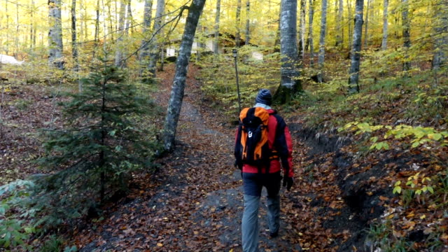 man walking to house in the forest in autumn