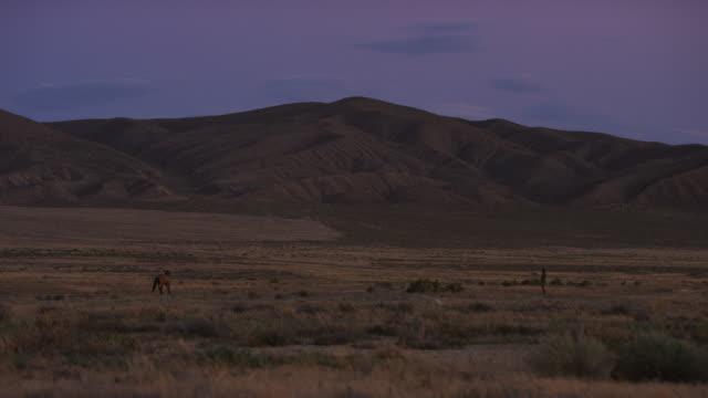 stockvideo's en b-roll-footage met man walking towards wild horse in prairie - alleen één mid volwassen man
