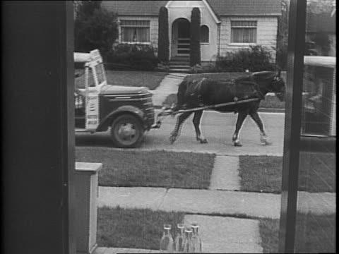 a man walking two horses past dairy milk trucks / three horses harnessed to the front of milk trucks / a worker harnessing a horse to a milk truck /... - briglia video stock e b–roll