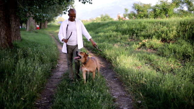 man walking with his favorite pet - mature adult stock videos & royalty-free footage