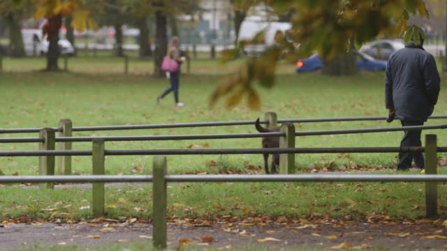 a man walks a dog on a lead in a london park - public park stock videos & royalty-free footage