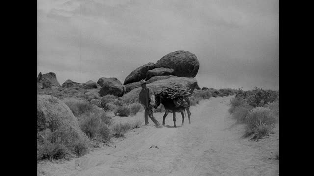 1953 A man walks a donkey through the desert