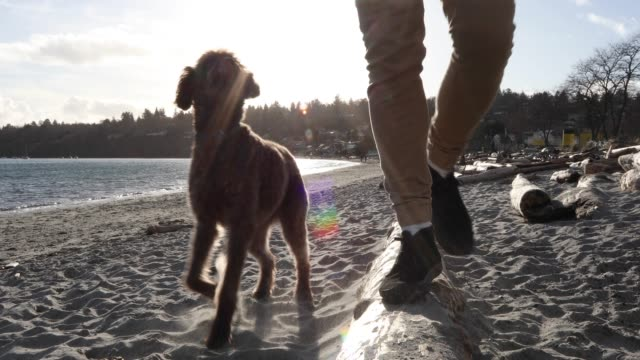 man walks along beach log, sea distant - mature men stock videos & royalty-free footage