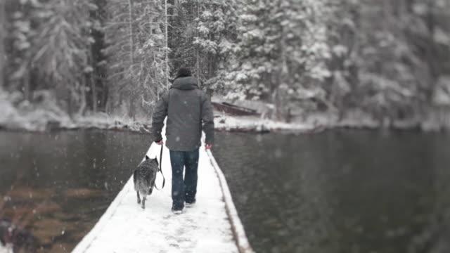 man walks dog across wooden bridge, during snowstorm - ascentxmedia stock videos & royalty-free footage