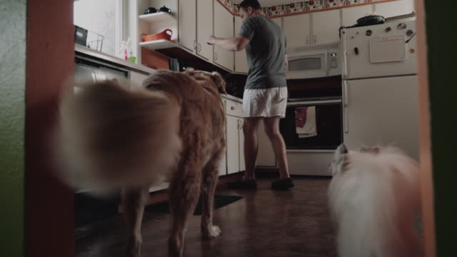 a man walks into the kitchen with his dogs and gives them a treat. - boxer shorts stock videos and b-roll footage