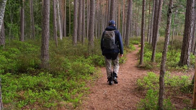 a man walks on a path in a primeval forest in daylight in spring - ourbaniserat motiv bildbanksvideor och videomaterial från bakom kulisserna