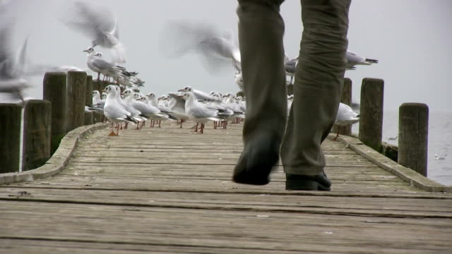 Man walks on jetty banishing seagulls