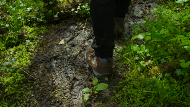 man walks on muddy path in woodland - national park stock videos & royalty-free footage