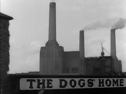 a man walks past a sign for battersea dogs' home - battersea stock videos & royalty-free footage