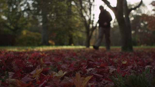 Man walks through leaf litter in Autumn sunshine, Gloucestershire, England