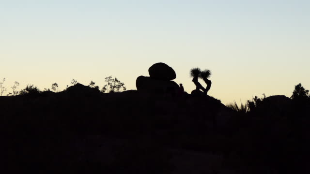 man walks up to a large boulder and a joshua tree in silhouette joshua tree national park sunset in the mojave desert california - ridge stock videos & royalty-free footage