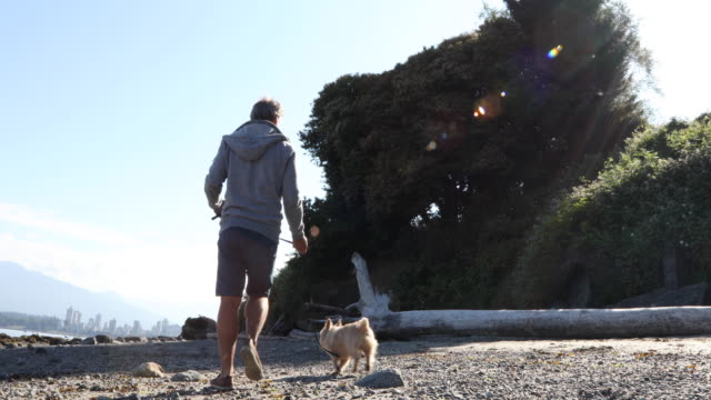 man walks yorkshire terrier dog along beach, ocean edge - mature men stock videos & royalty-free footage