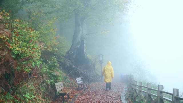vídeos de stock e filmes b-roll de man wandering in foggy forest in yellow raincoat - dream