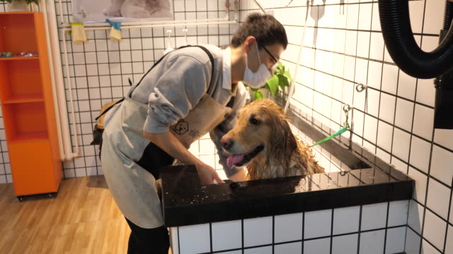 man washing dog in a pet care shop - shampoo stock videos & royalty-free footage