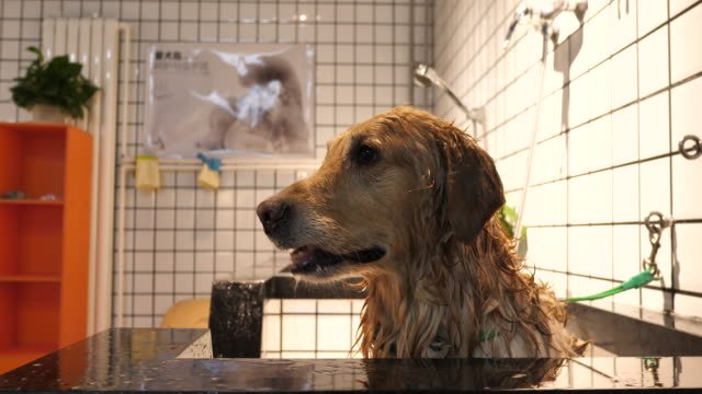 Man washing dog in a pet care shop