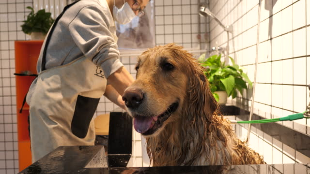 Man washing dog in a pet care shop