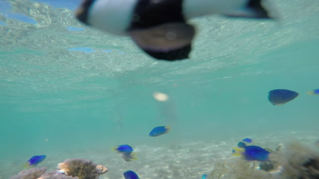 man with a child with mask and snorkel under the sea with fish - huahine island stock videos and b-roll footage